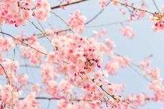 Kempy dovolená v jaře